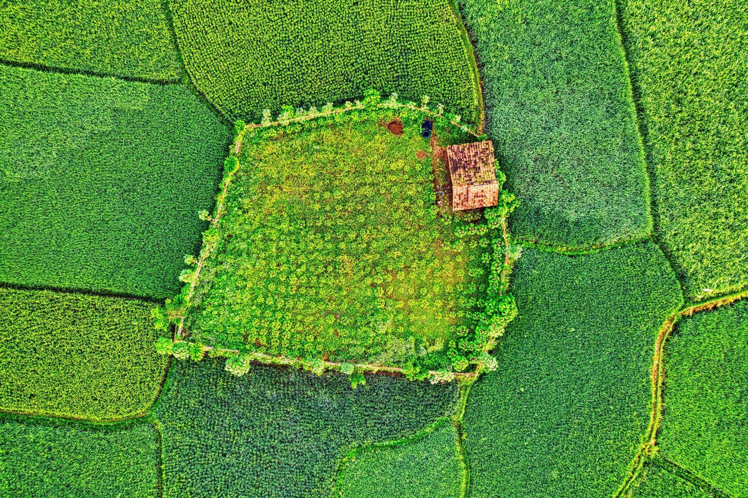 groen en geel getextureerd land foto