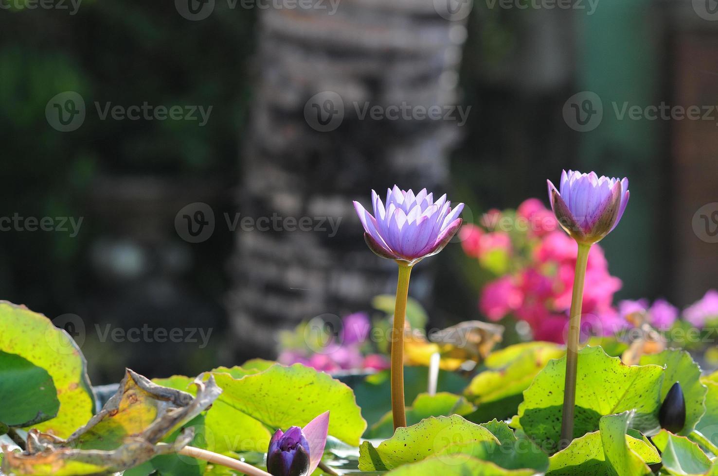 fleur tropicale foto