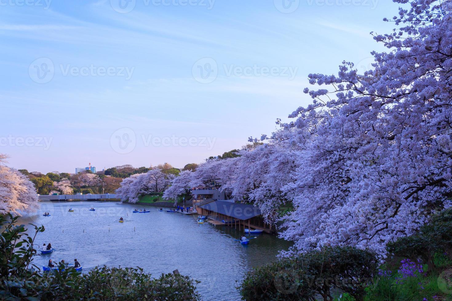 kersenbloesems in tokyo, japan foto