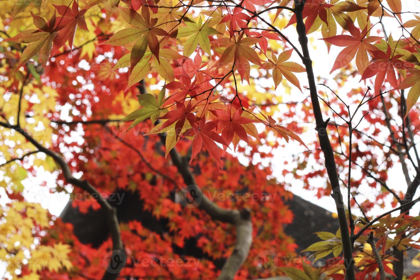 herfstbladeren de herfstbladeren foto