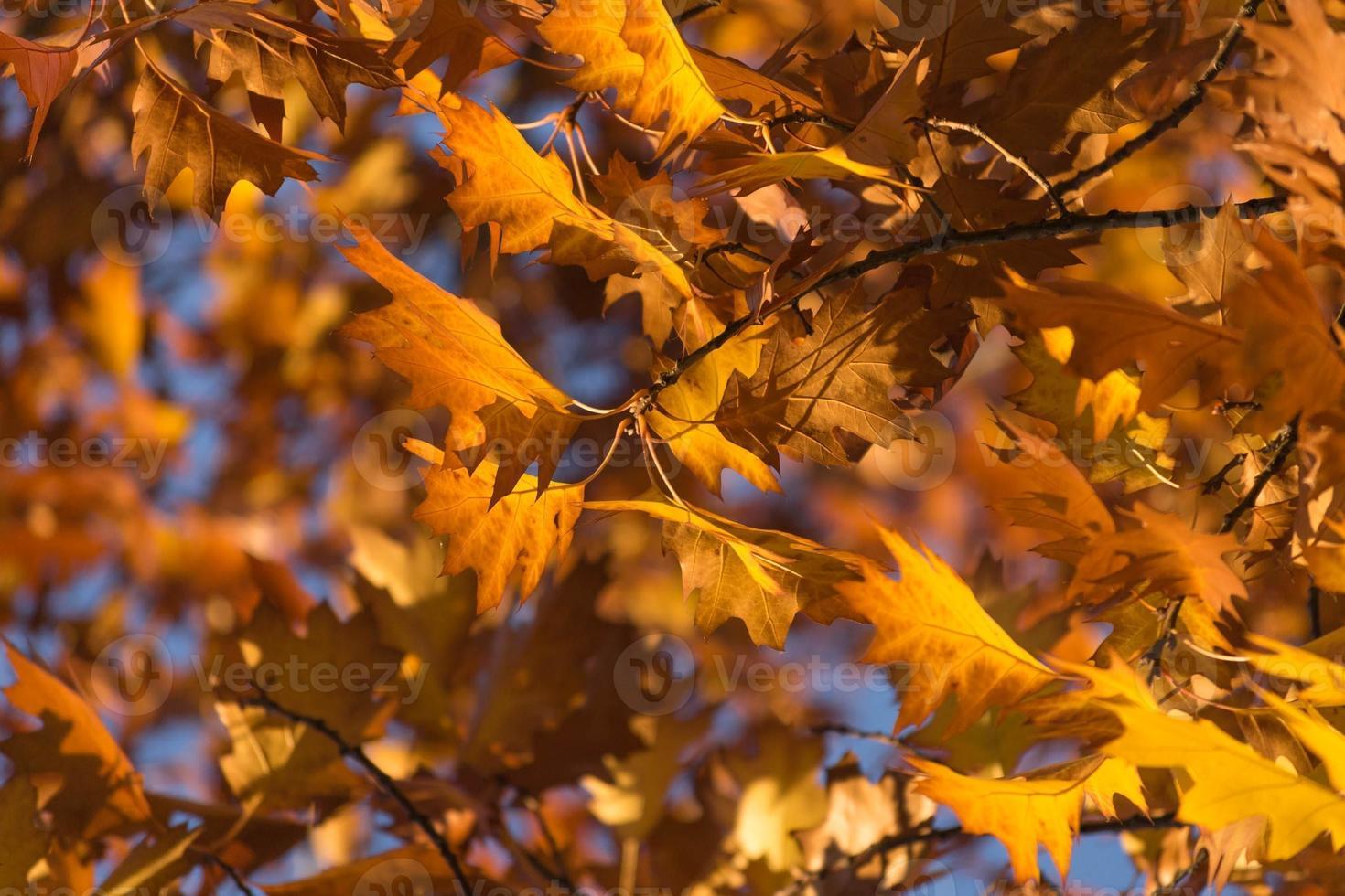 herfst leves foto