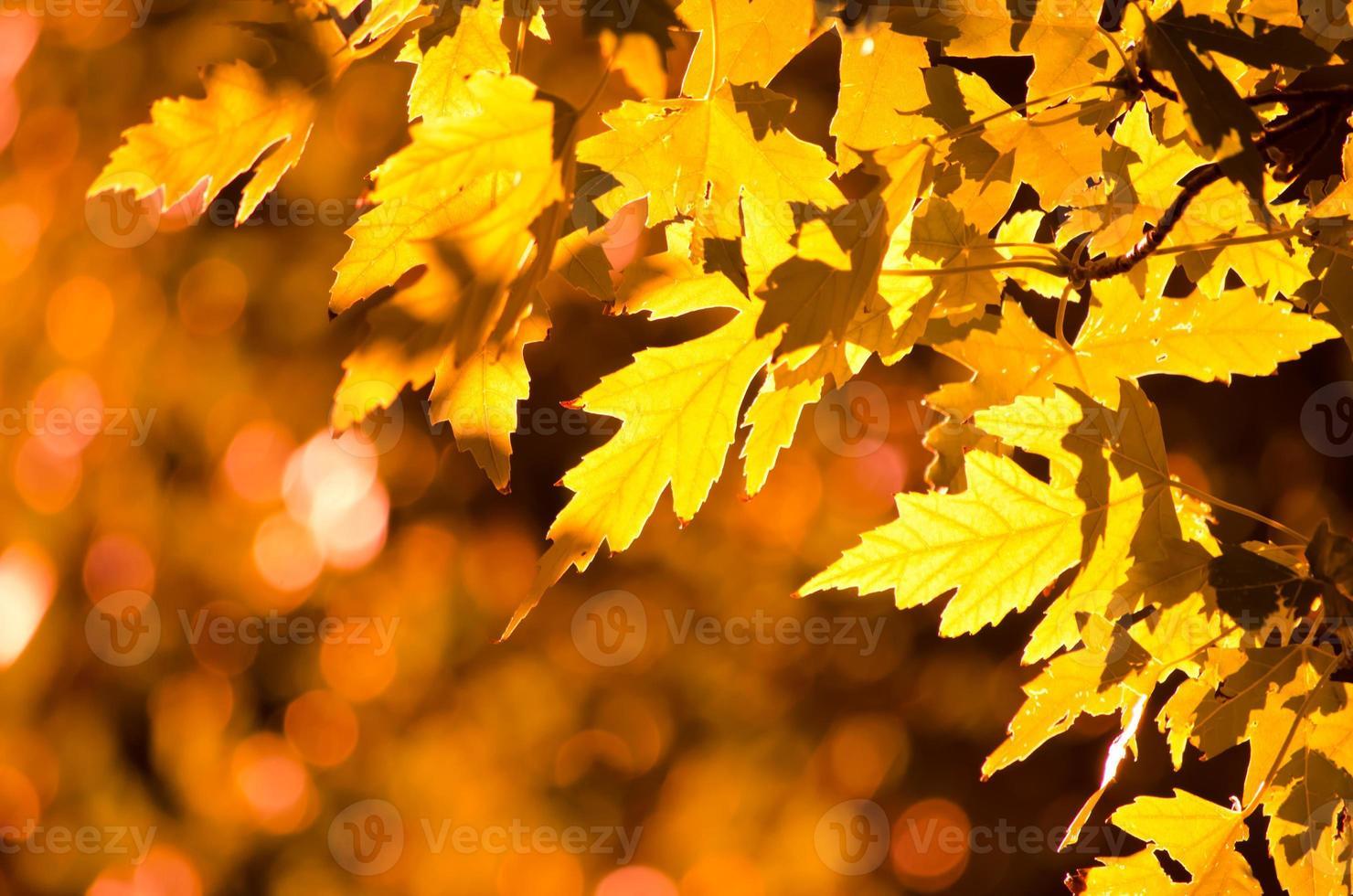 herfst goud foto
