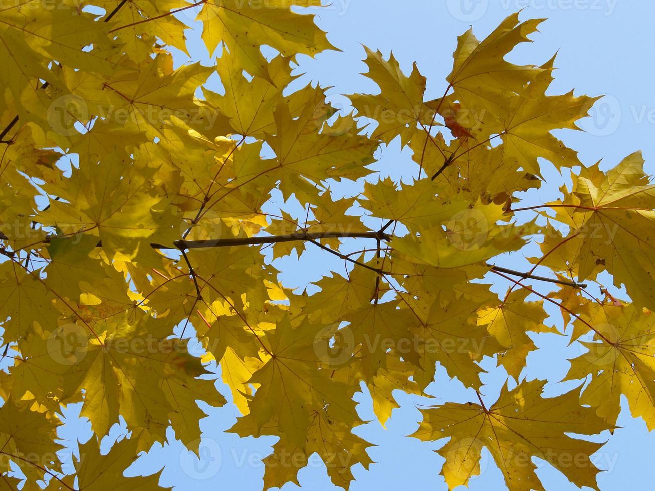 herfst [12] foto