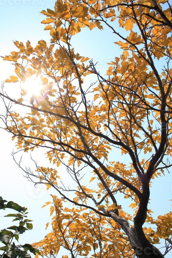 herfst boom foto