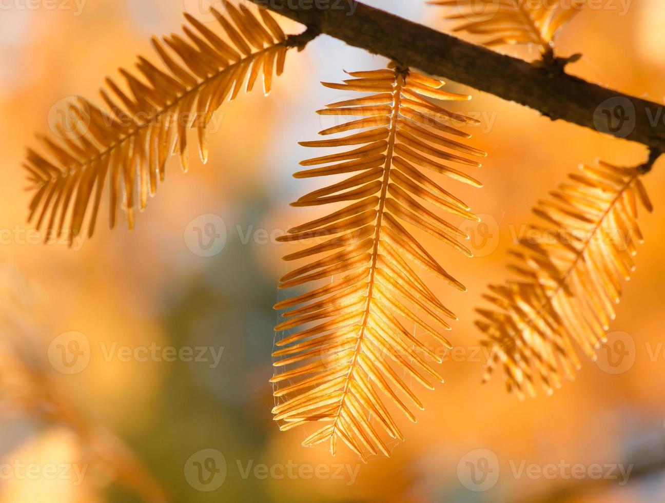 herfst achtergrond foto