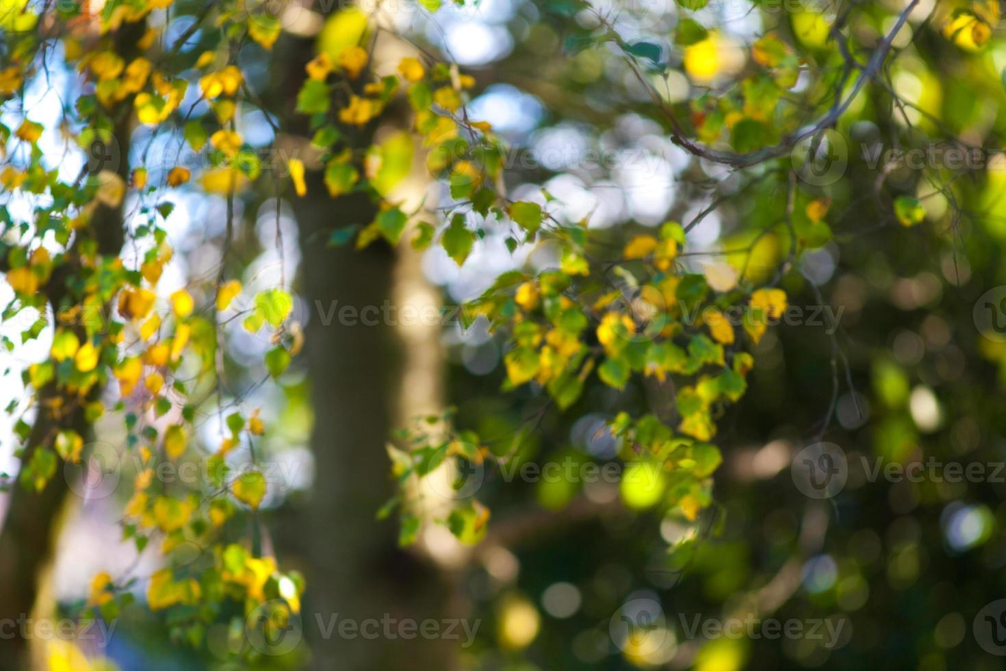 herfst bomen foto