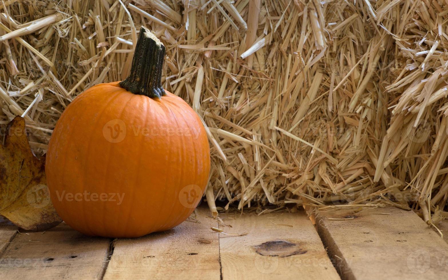herfst pompoen foto