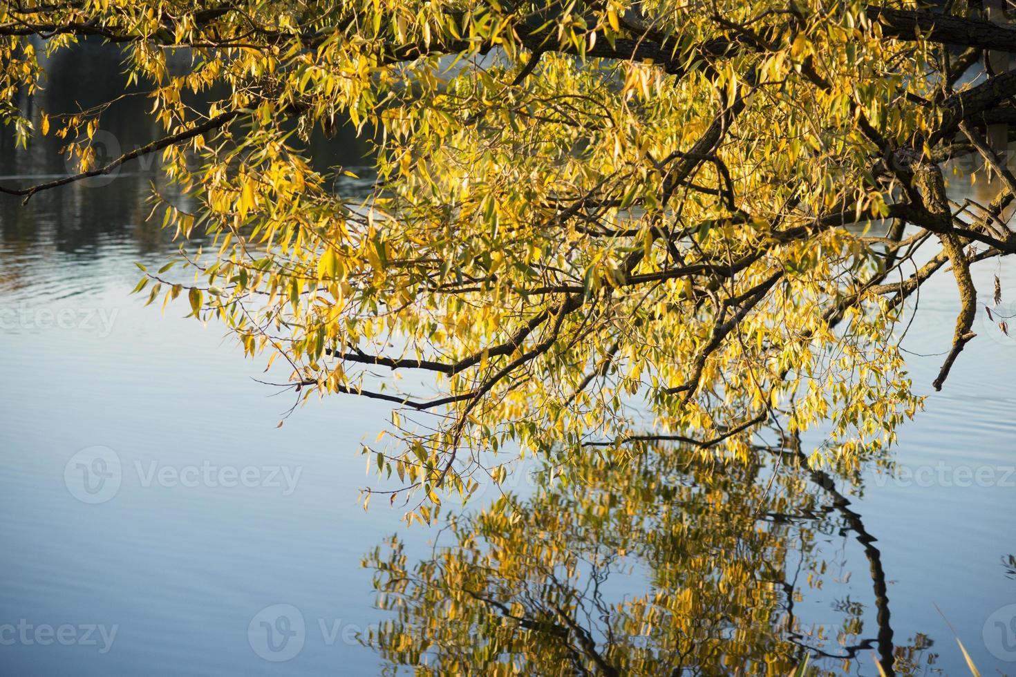 herfst wilg foto