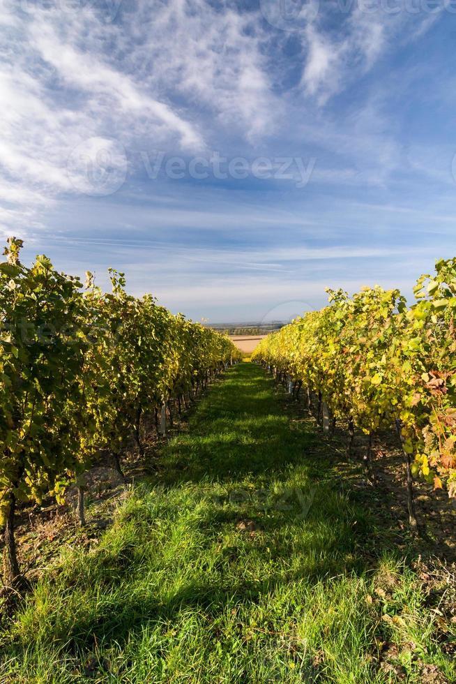 herfst wijngaard foto