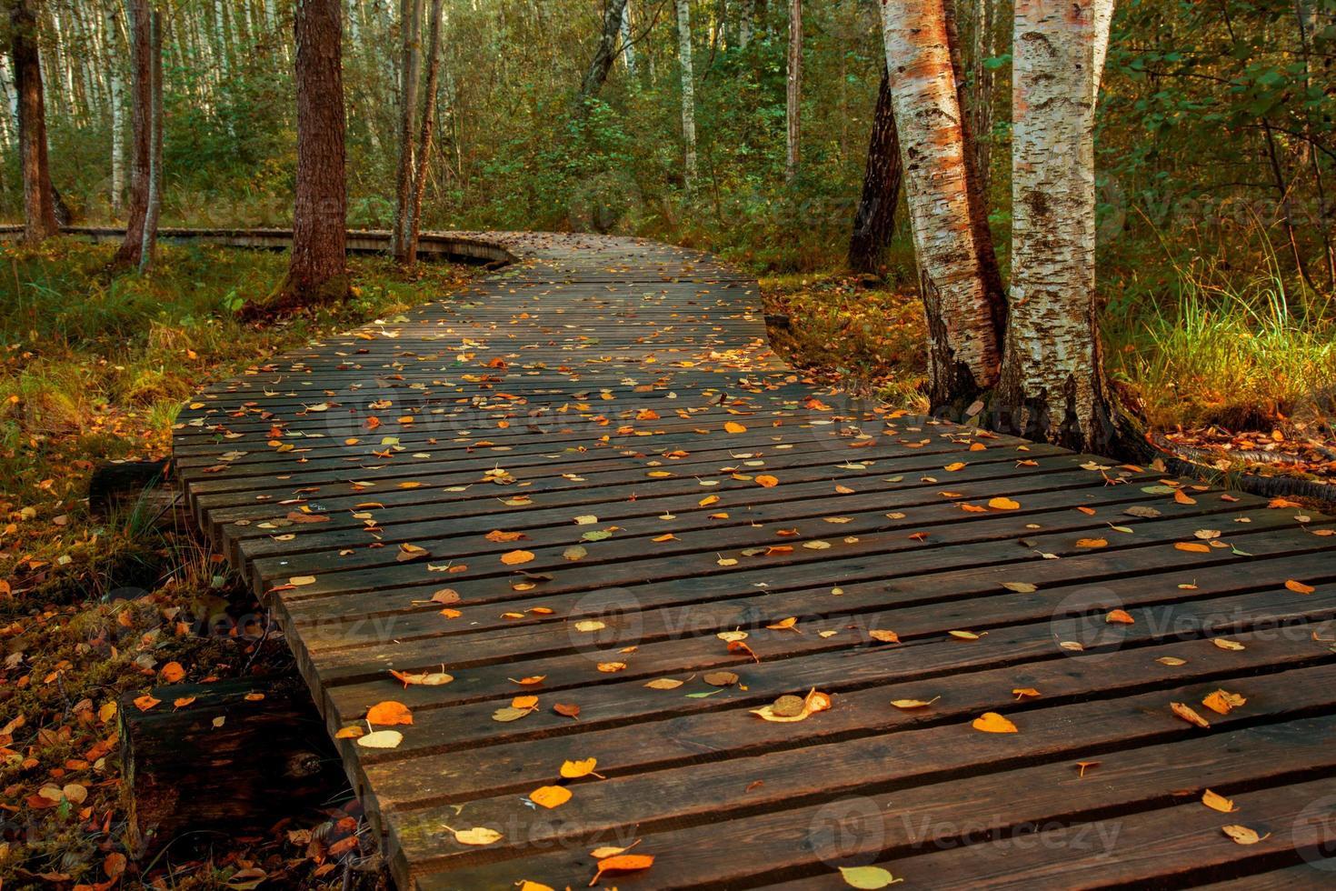 herfst trail foto