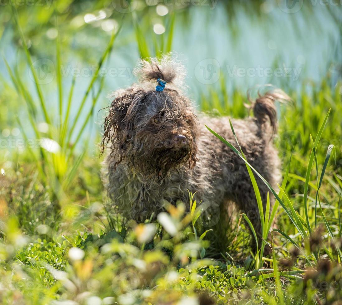 hond wacht op eigenaar foto