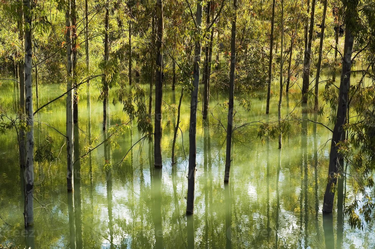 overstromingen, bomen in het water van het stuwmeer van zahara, andalusië, spanje foto