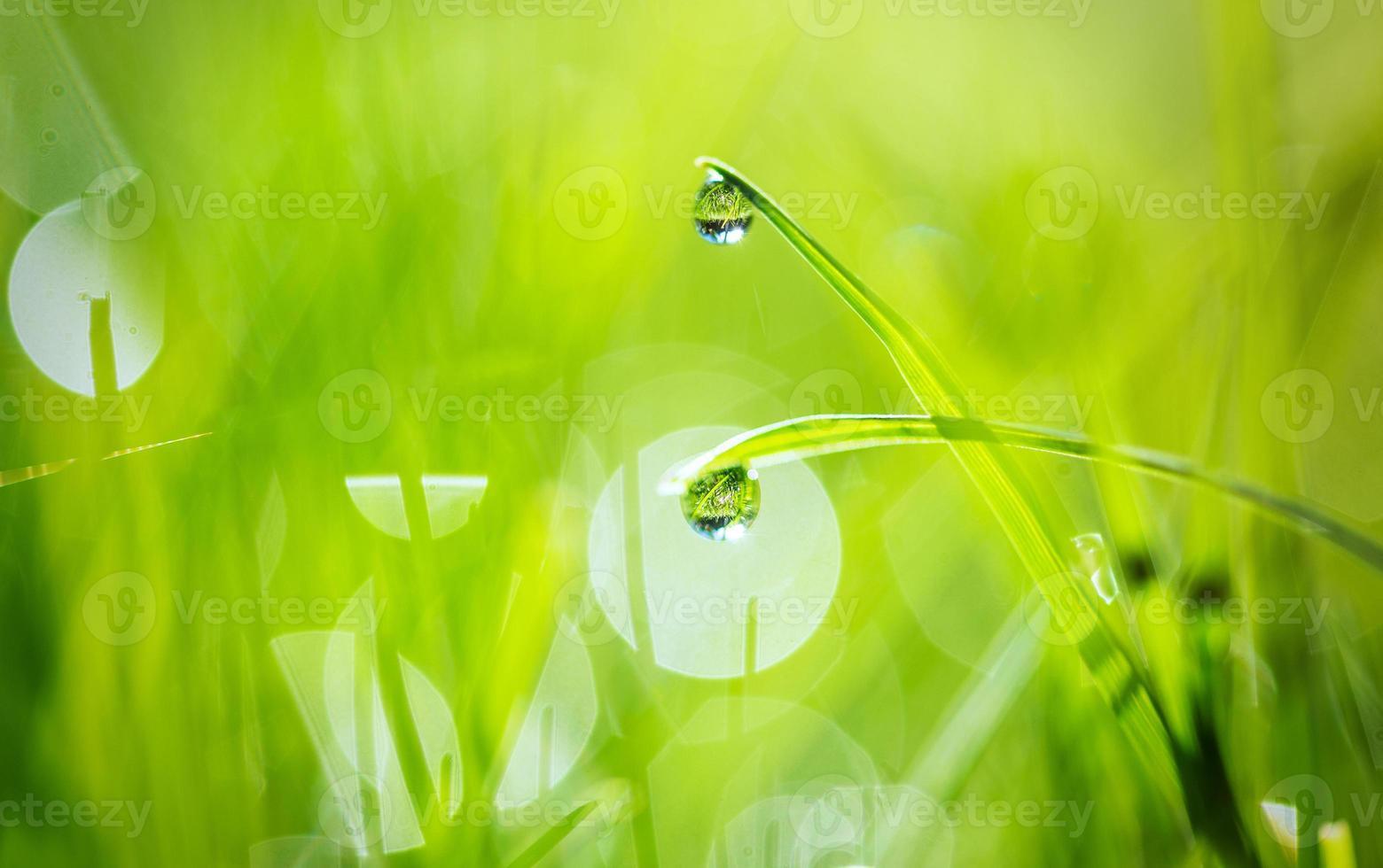 waterdruppels op gras foto