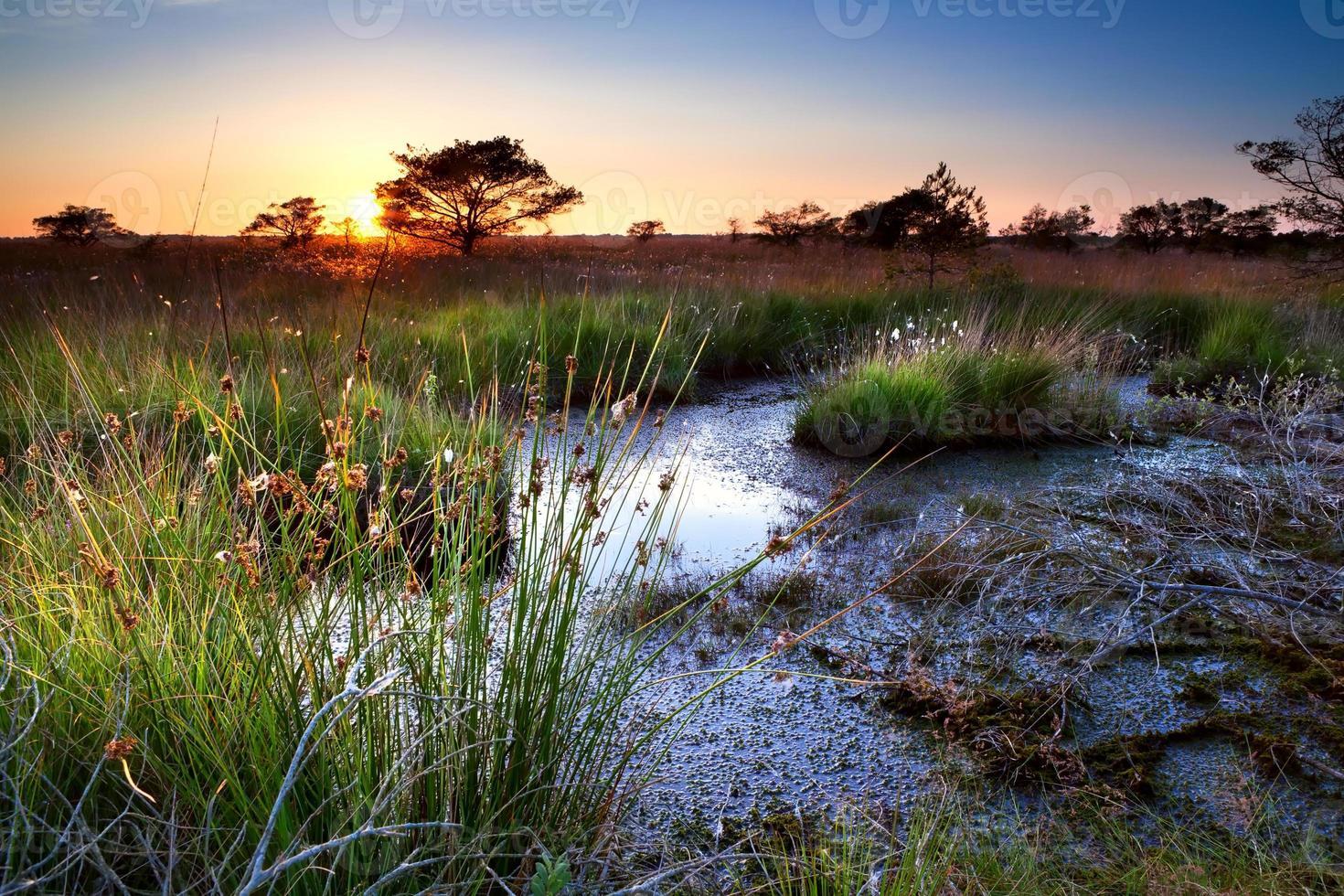 zomer zonsondergang over moeras foto