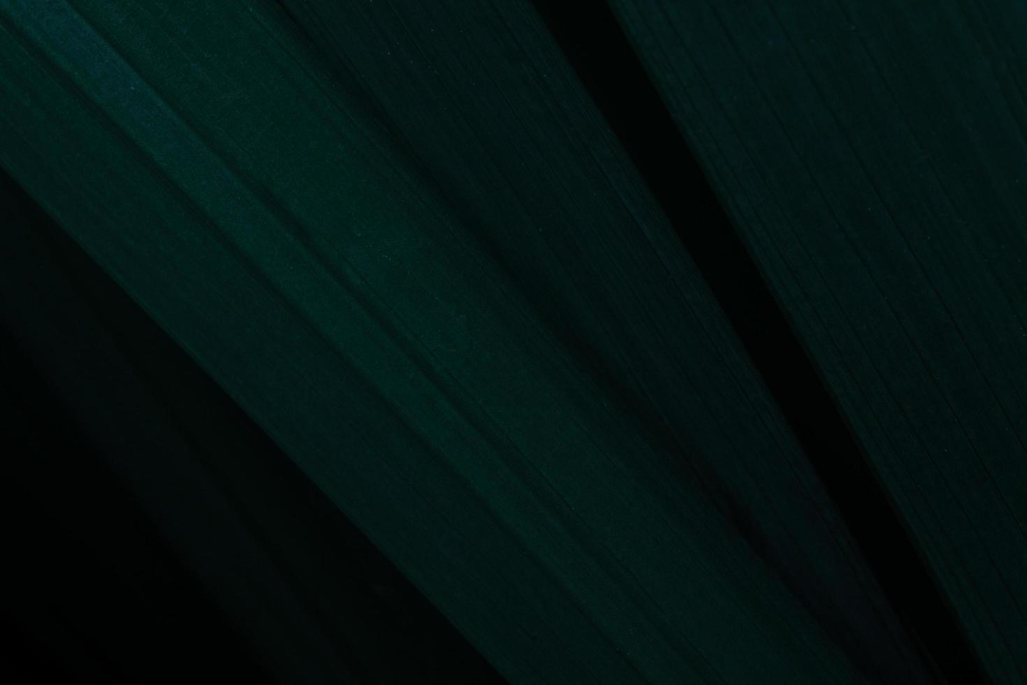 groene bladeren, donkere achtergrond foto