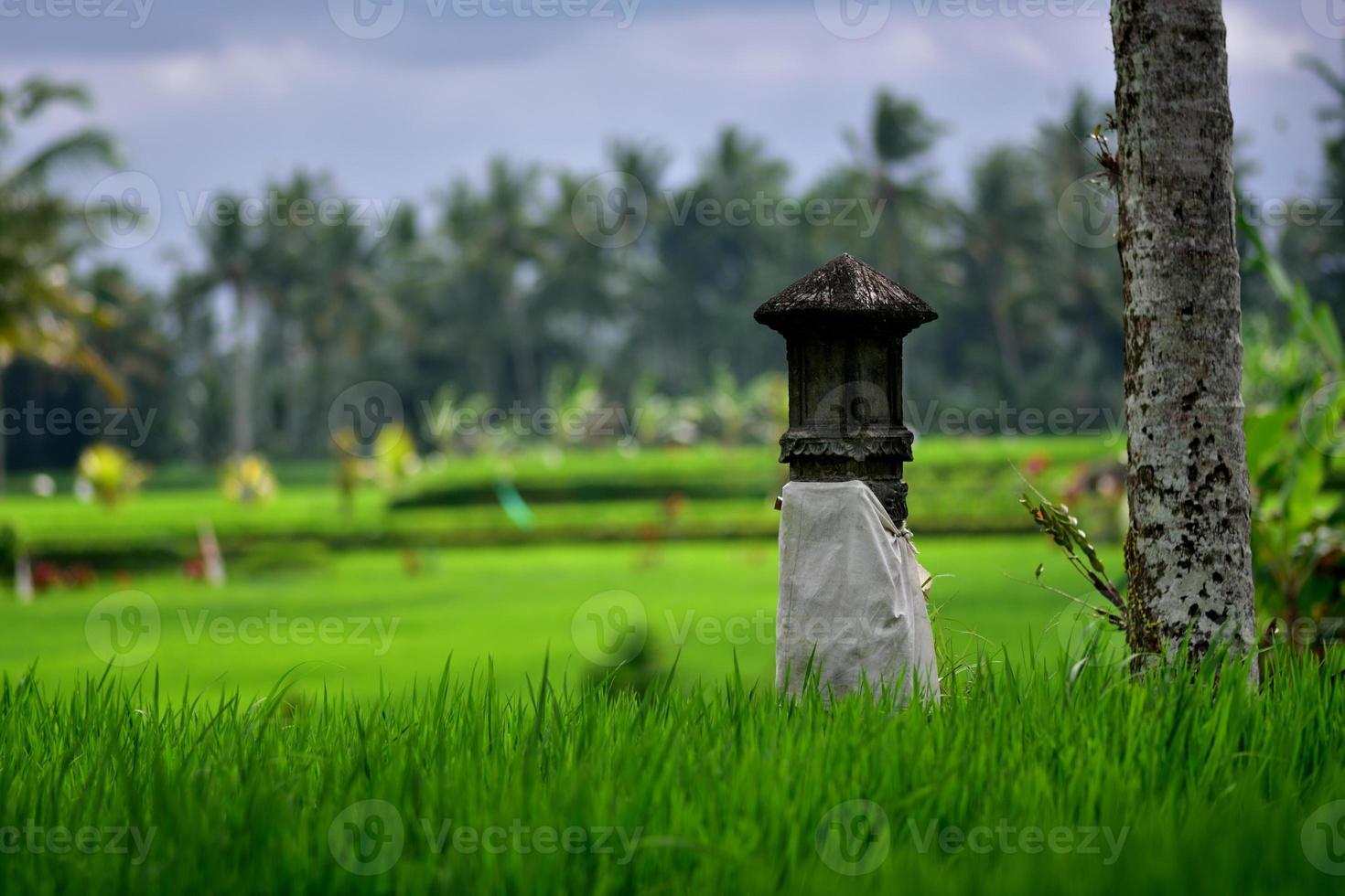 veranderen voor familie eigen rijstveld foto