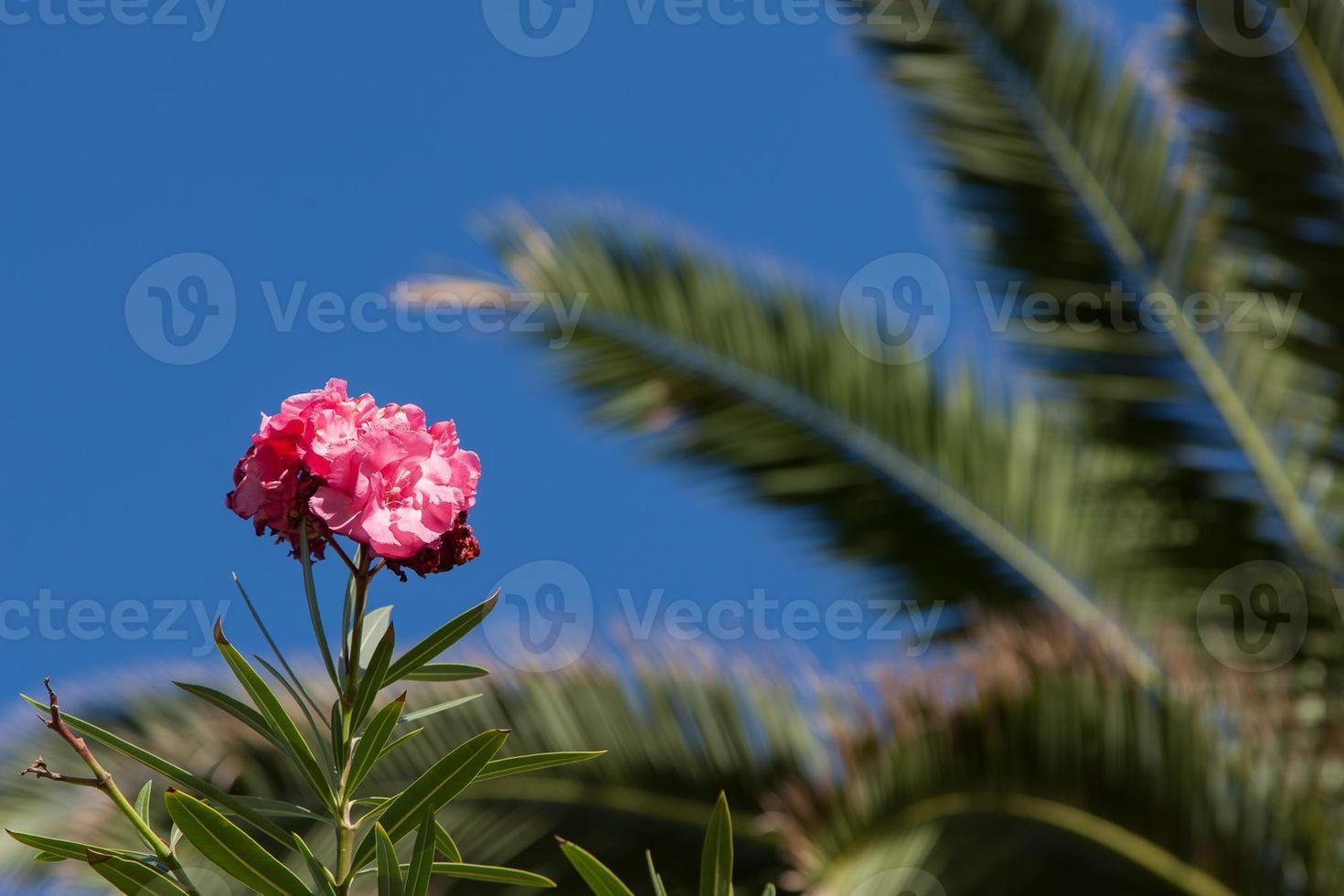 bloem in madeira foto