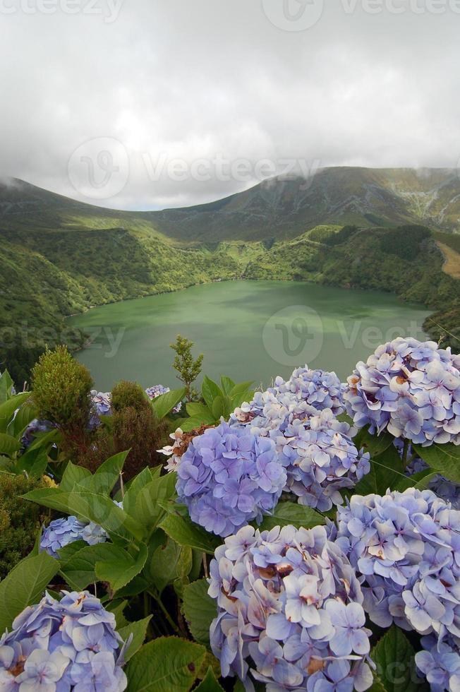 bloemen op de vulkaan foto