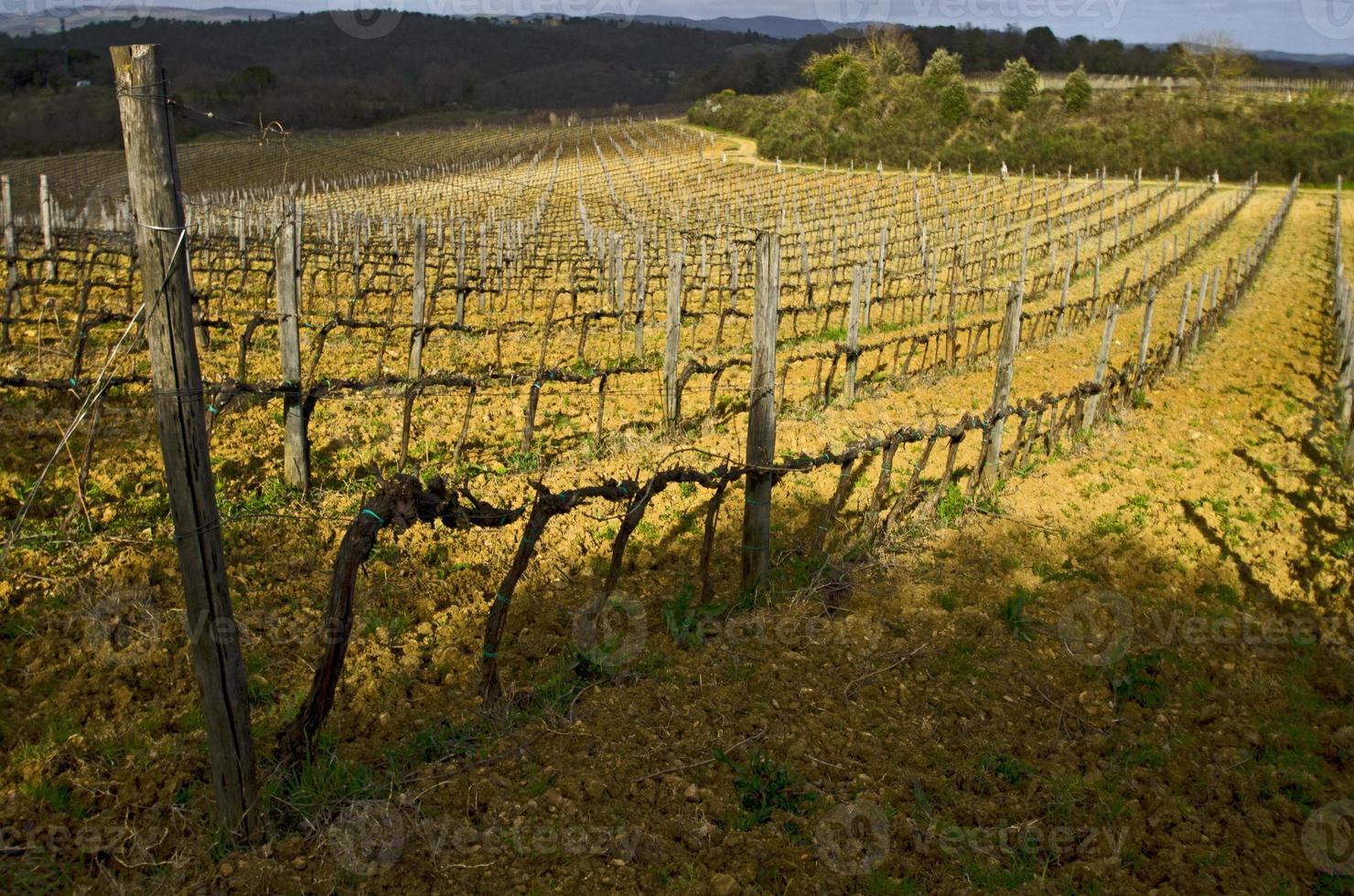 wijngaard Toscane, Italië in het voorjaar foto