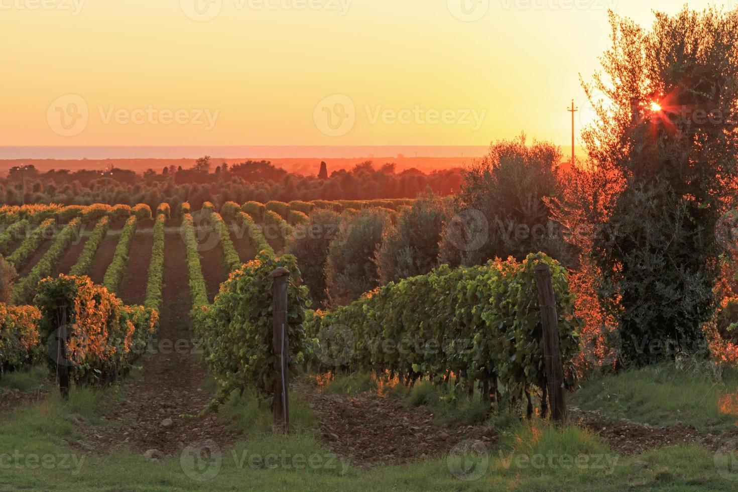 zonsondergang in een wijngaard, Toscane - Italië foto