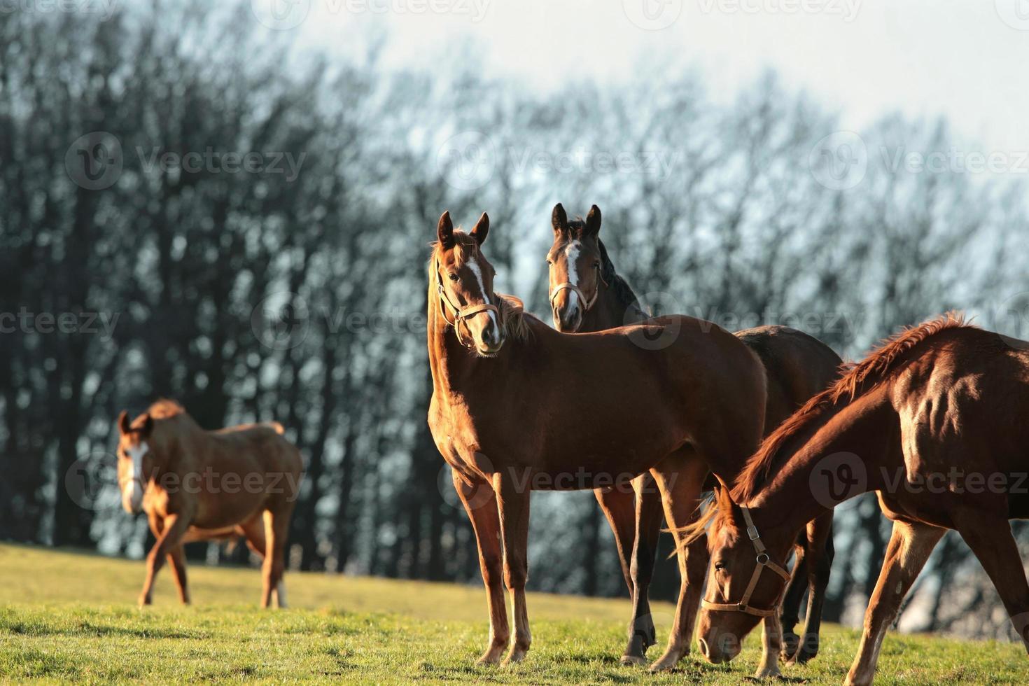 paarden in een weiland foto