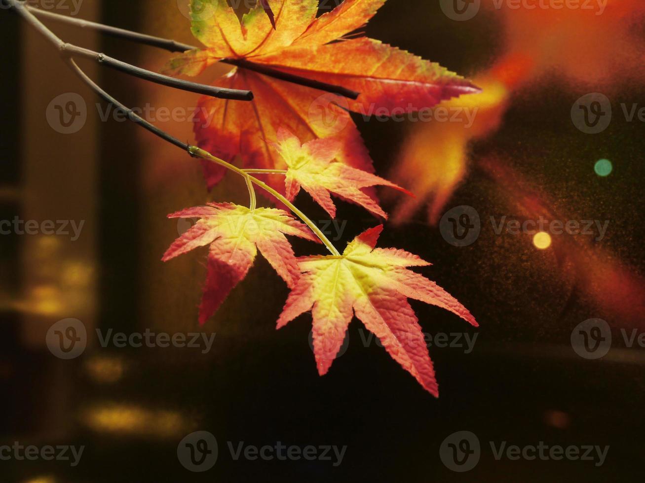 esdoorn bladeren foto