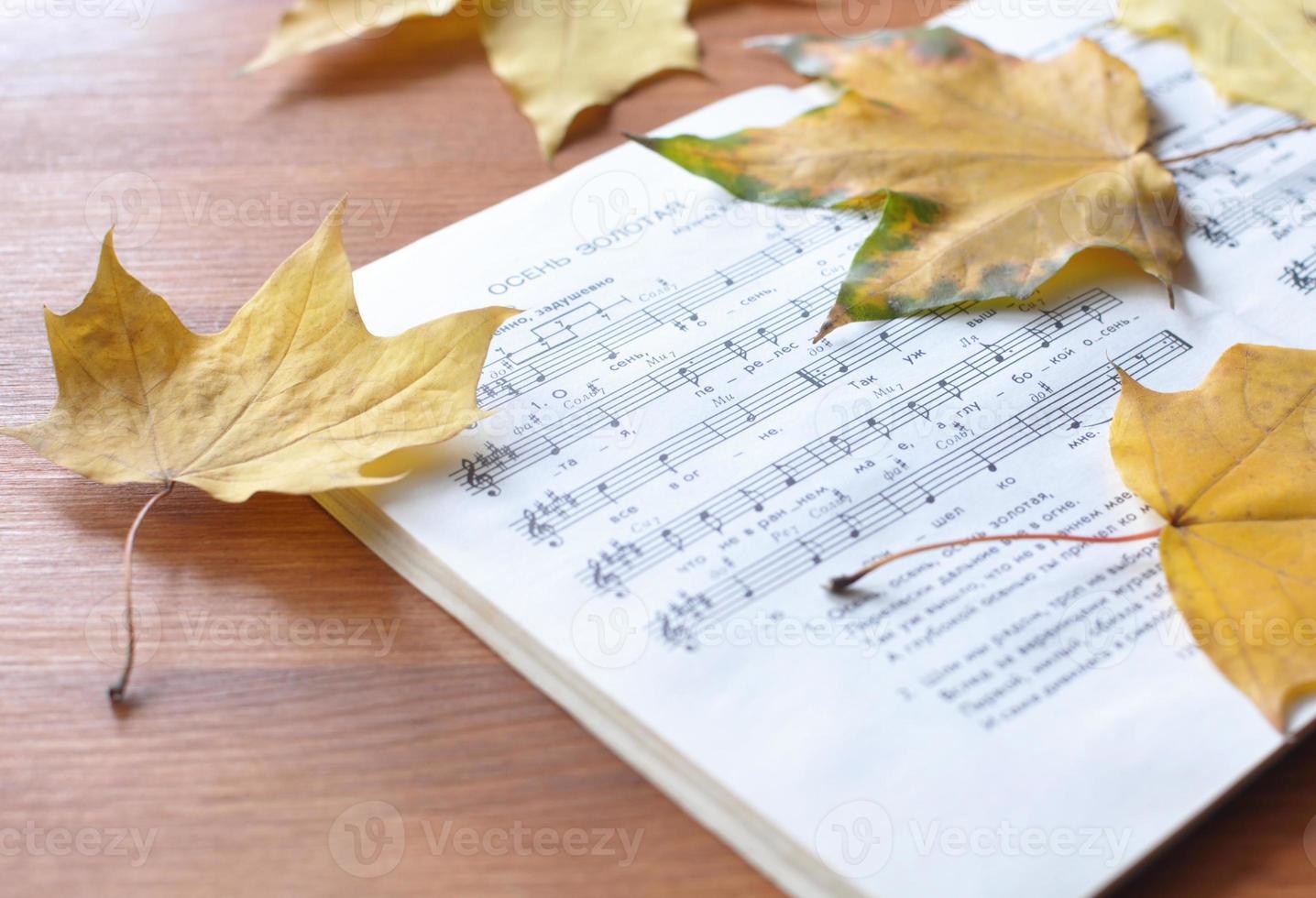 kleine trieste melodie. foto