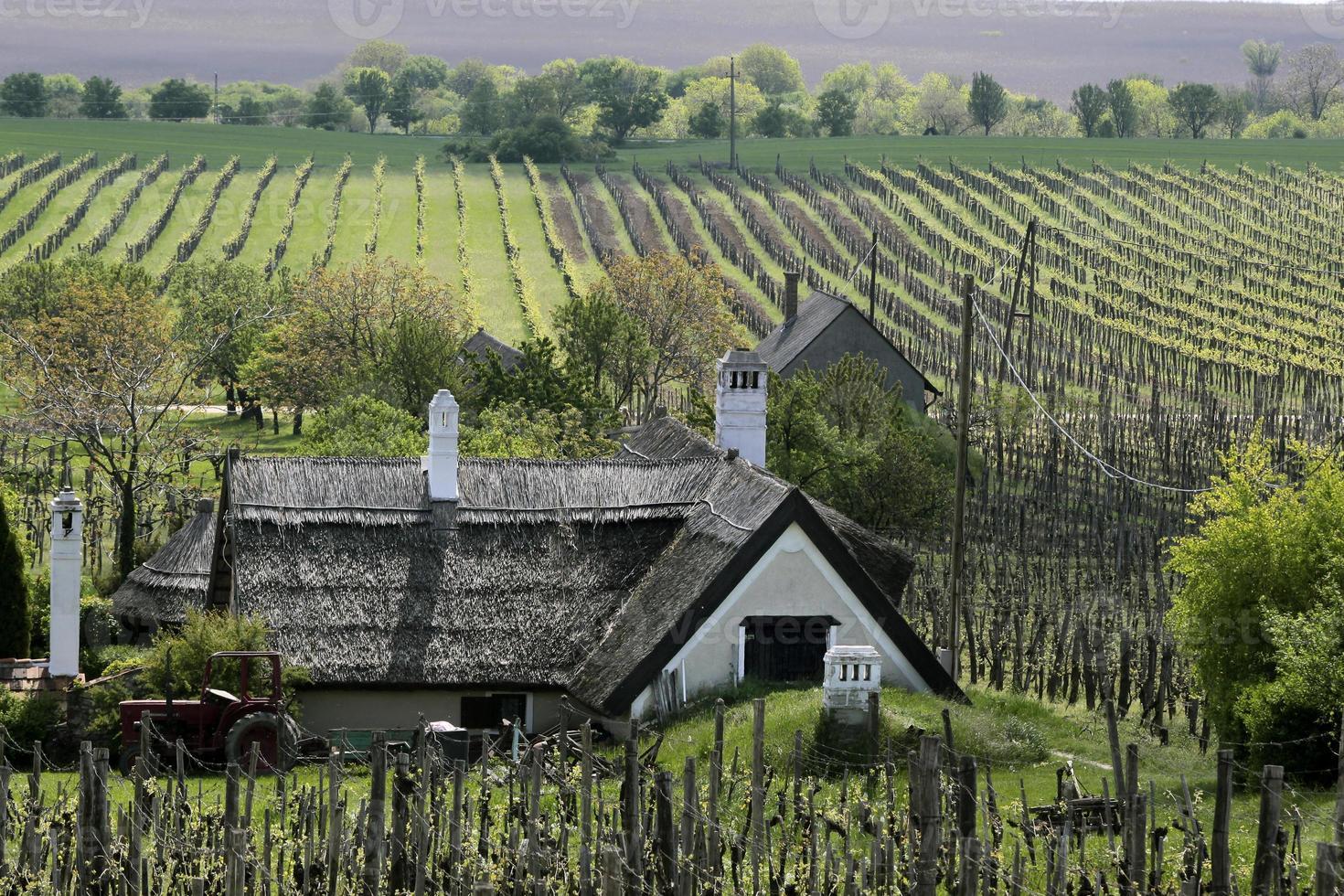 wijngaarden en boerderij aan het Balatonmeer foto