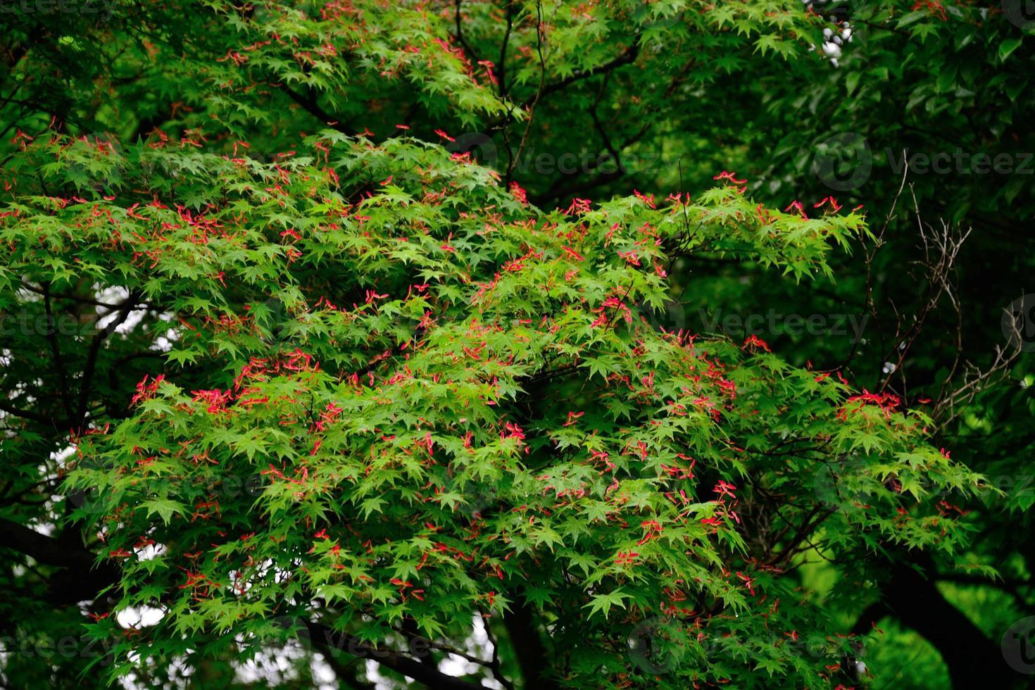 rode vleugels fladderen op de boom foto