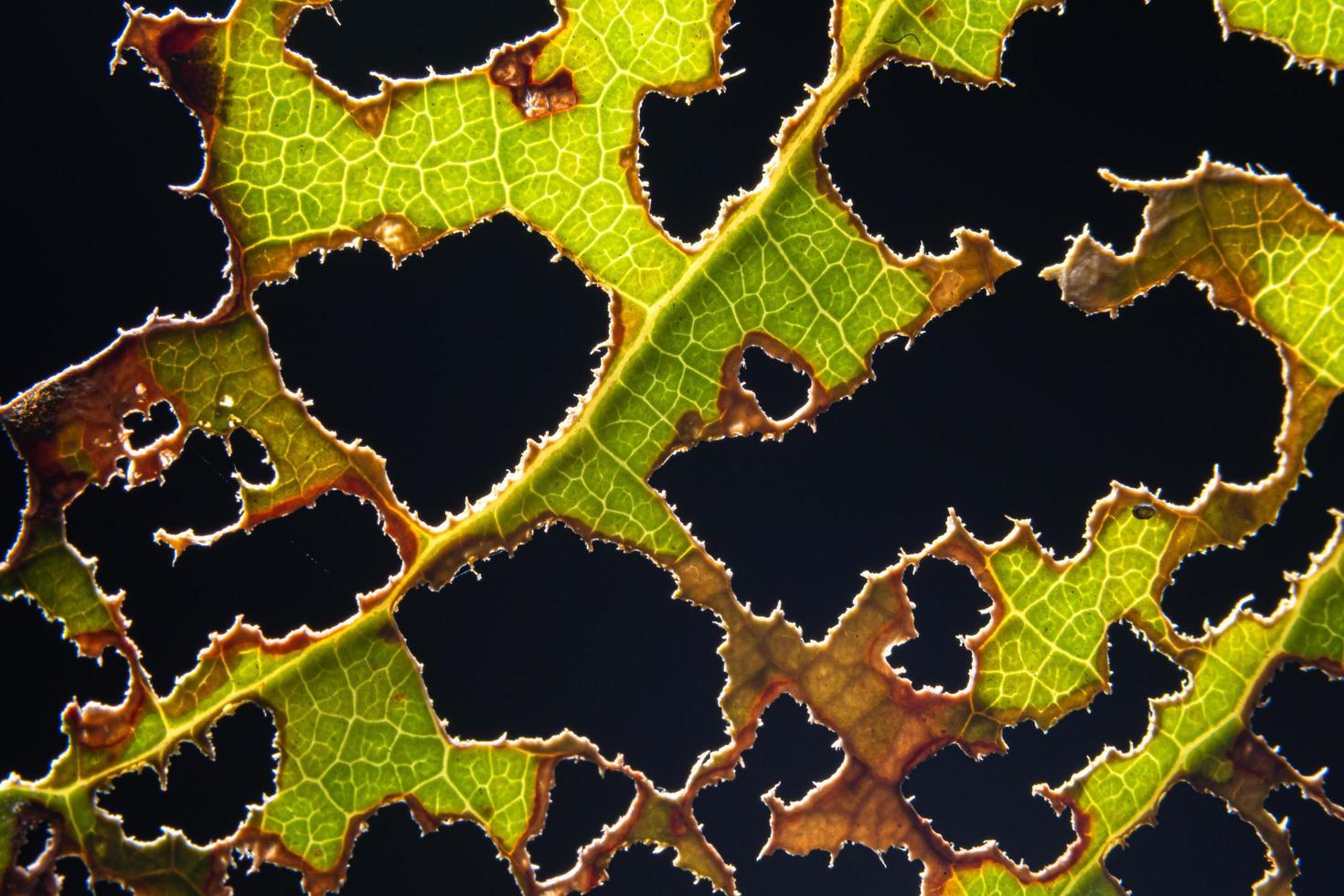 groen blad op zwarte achtergrond foto
