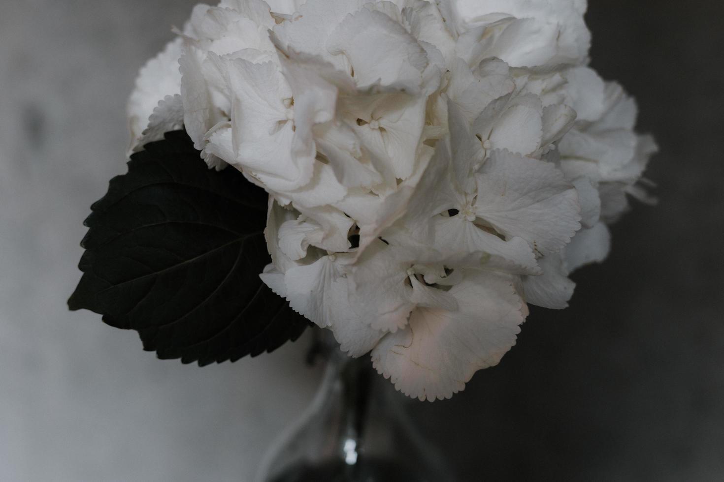 witte bloemblaadjes foto