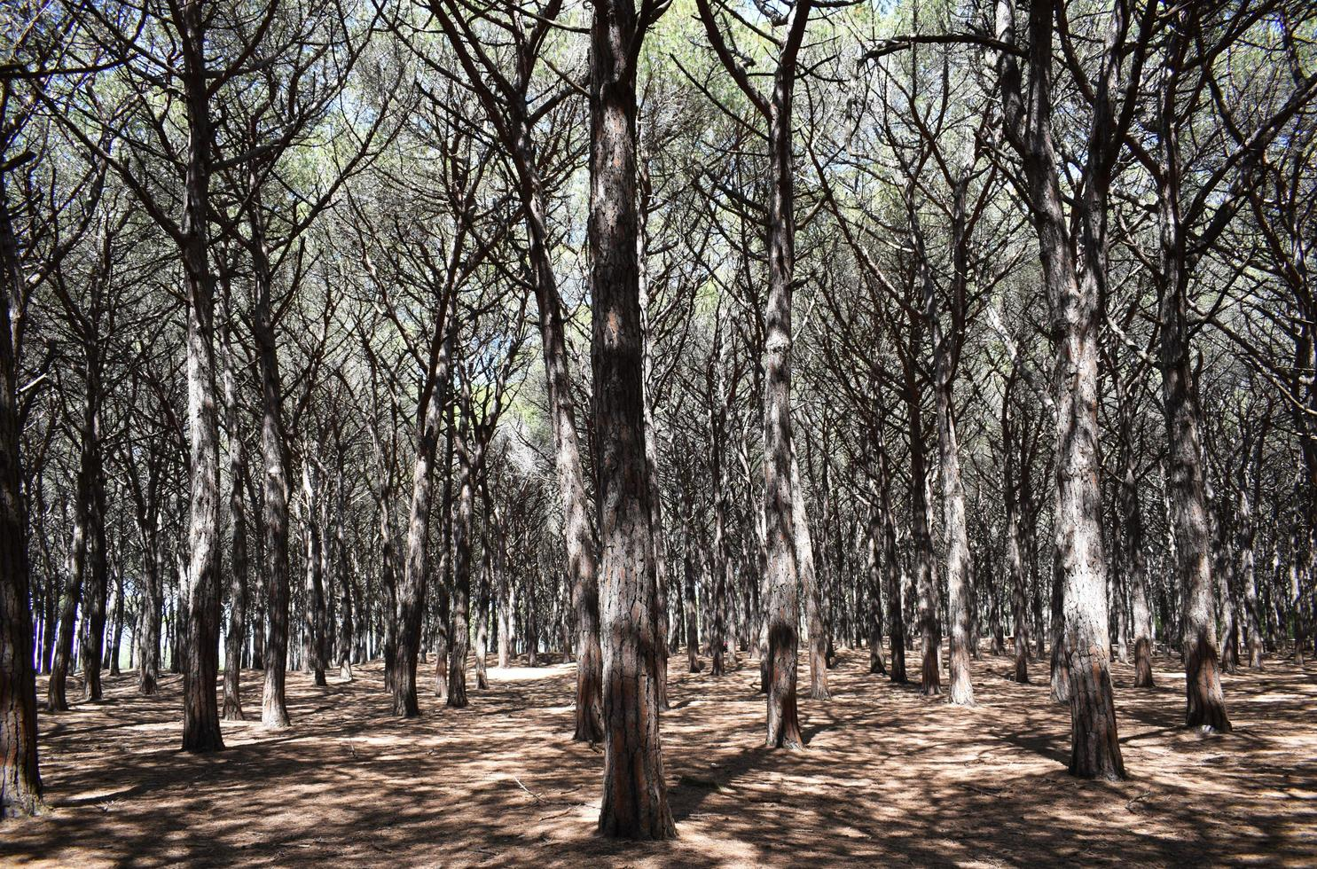 groene bladbomen overdag foto