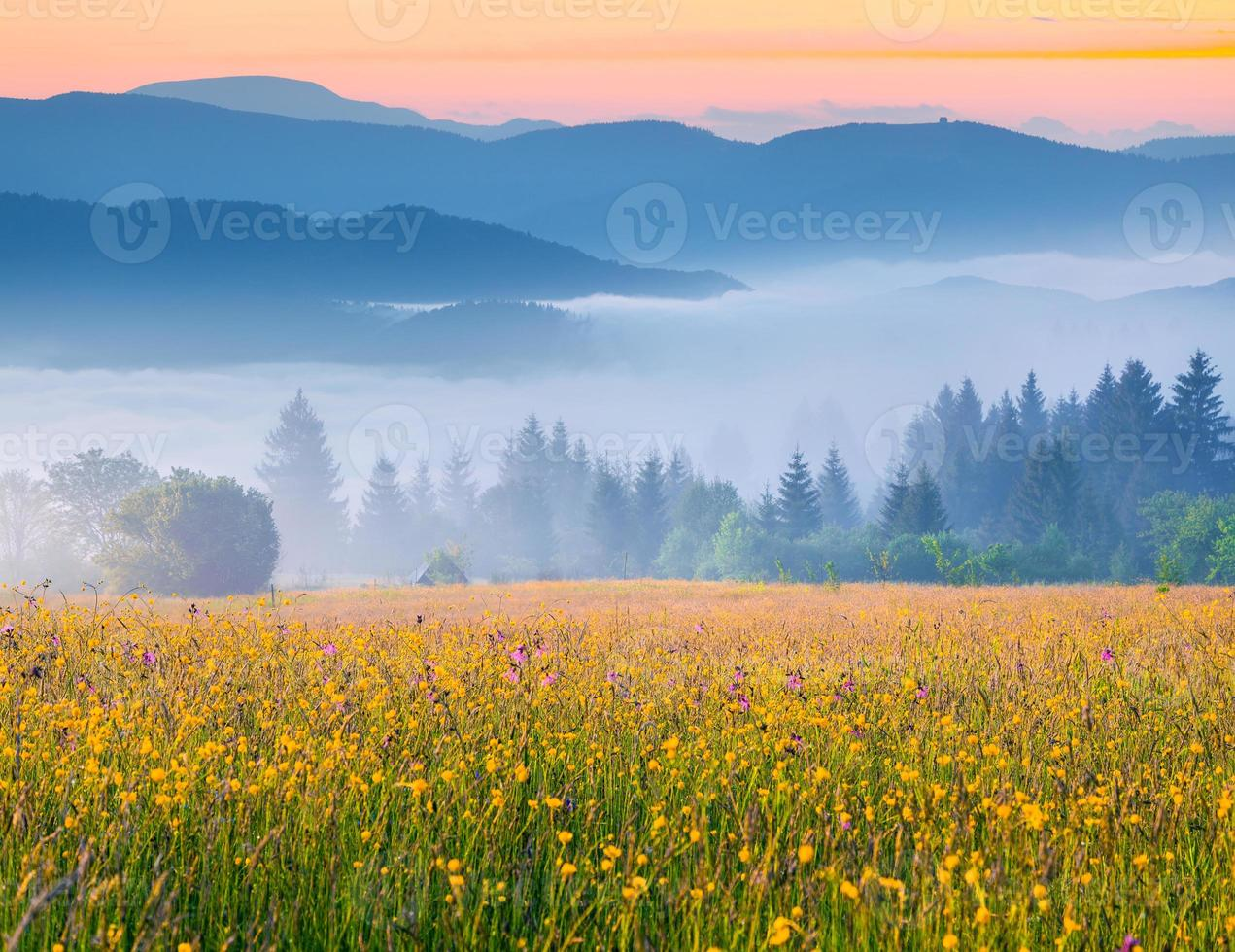 kleurrijke zomer zonsopgang in de mistige Karpaten foto