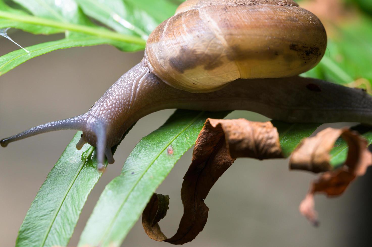 slak op een boom foto