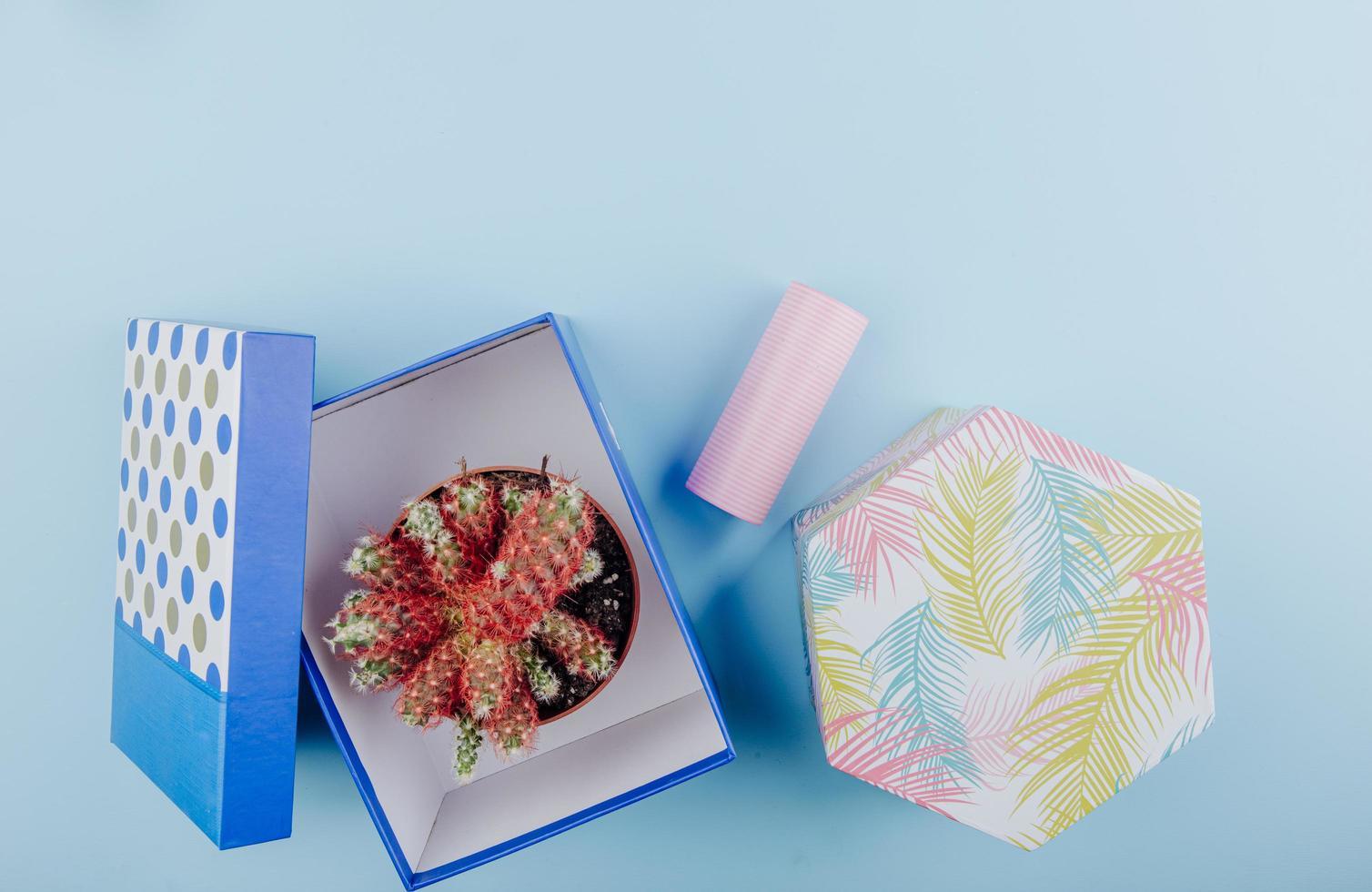 bovenaanzicht van een cactus in een bloempot in een kartonnen geschenkdoos foto