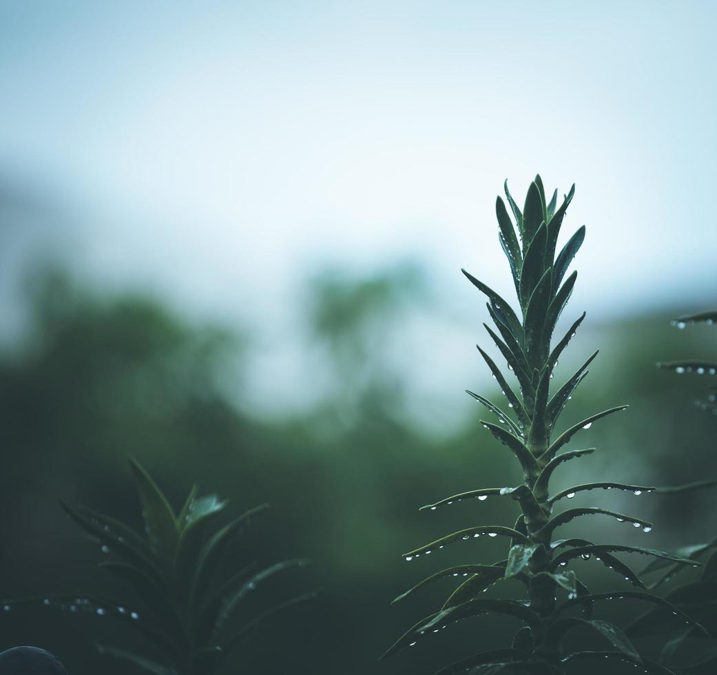 close-up van een groene plant foto