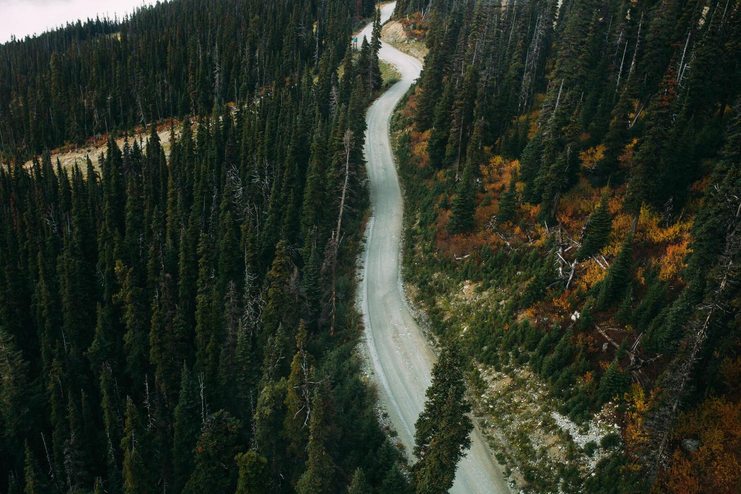 luchtfoto van lege weg door het bos overdag foto