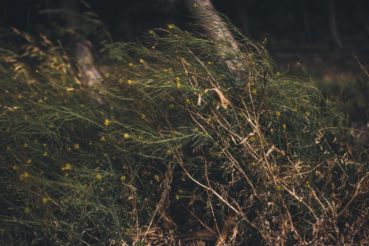 bosgebied met wilde bloemen foto