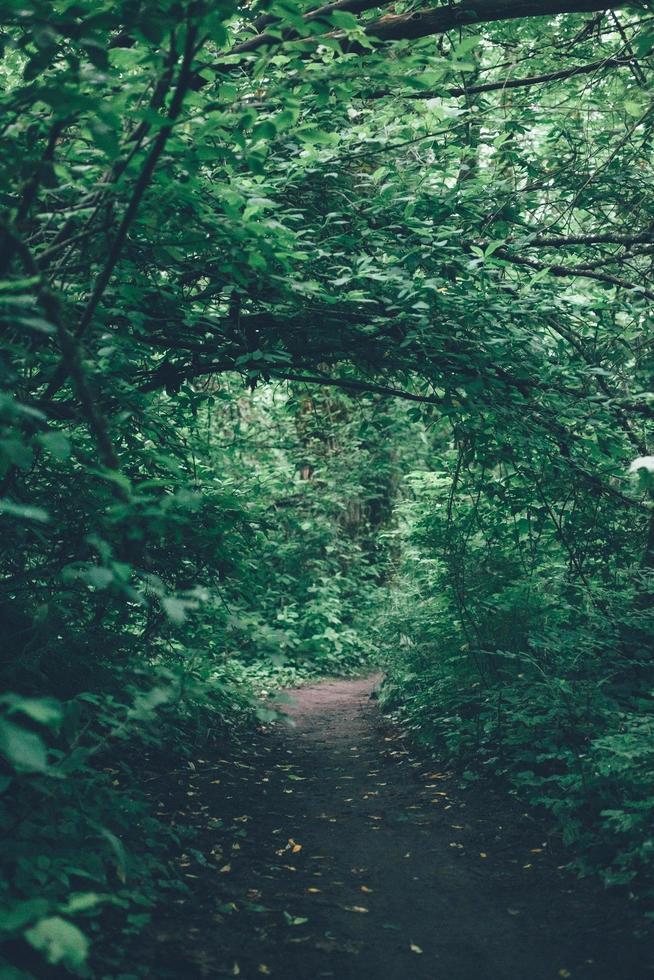 een pad door de groene bomen en planten overdag foto