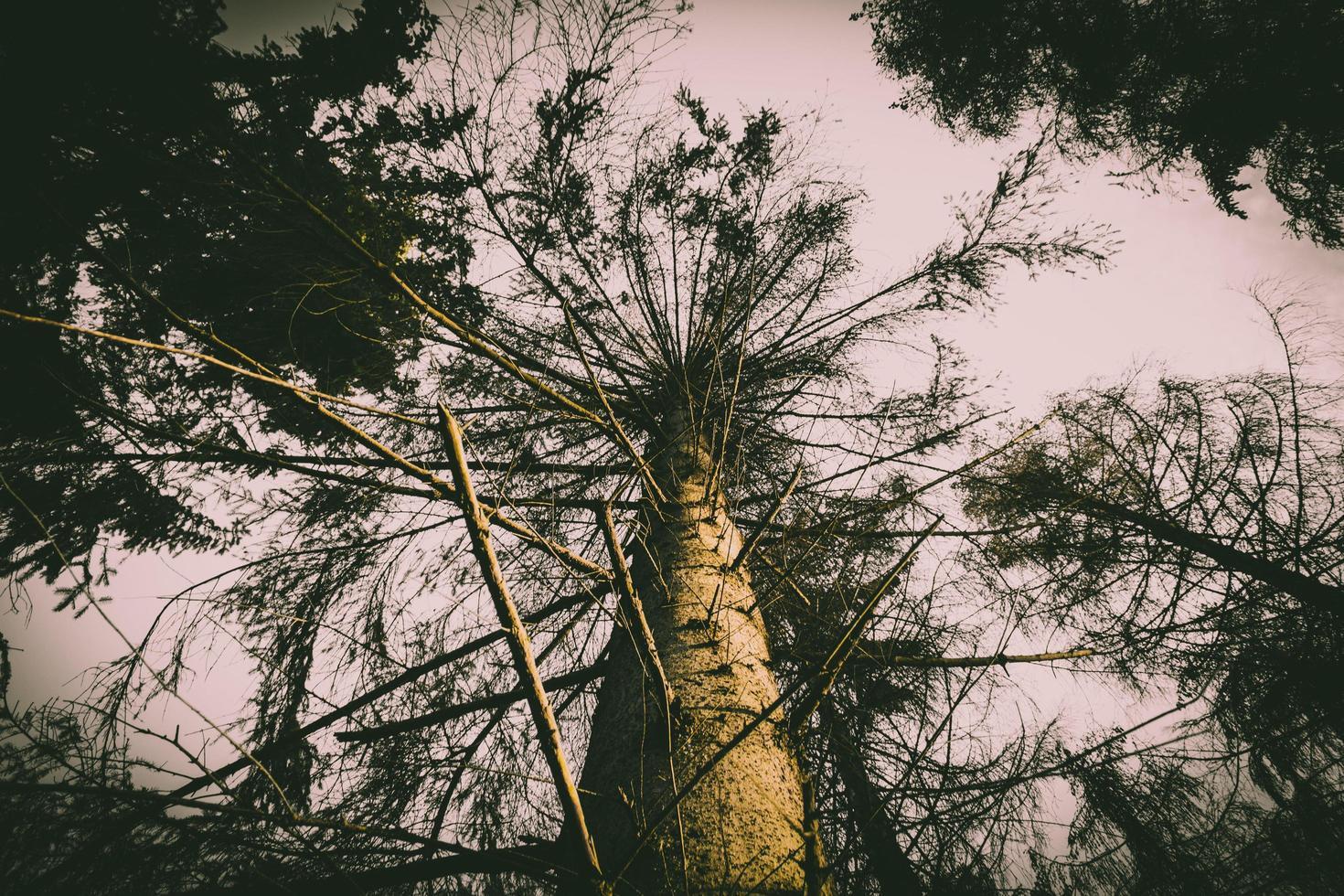 kijken naar bomen bij zonsondergang foto