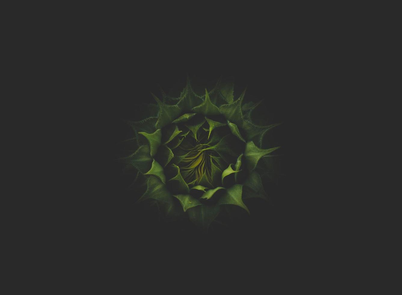 bovenaanzicht van vetplant foto