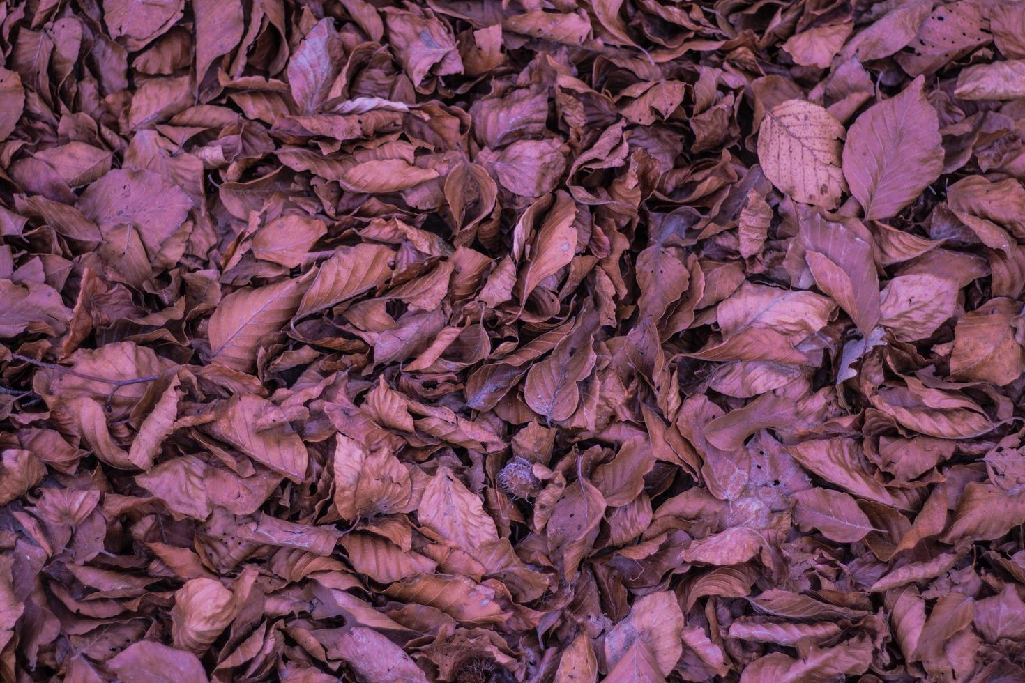 gedroogde bruine bladeren foto