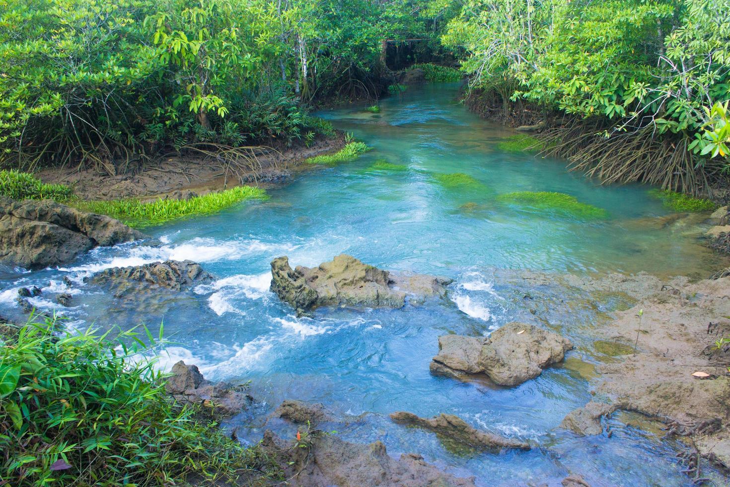 mangrovebos en een rivier foto