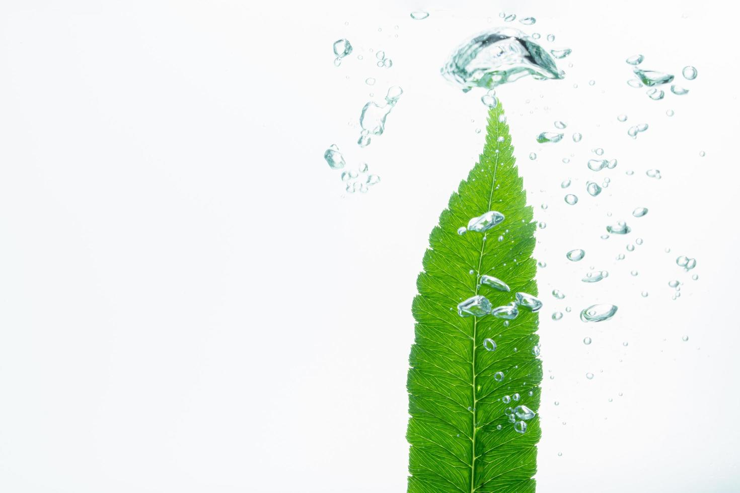 groen blad en bellen in het water foto