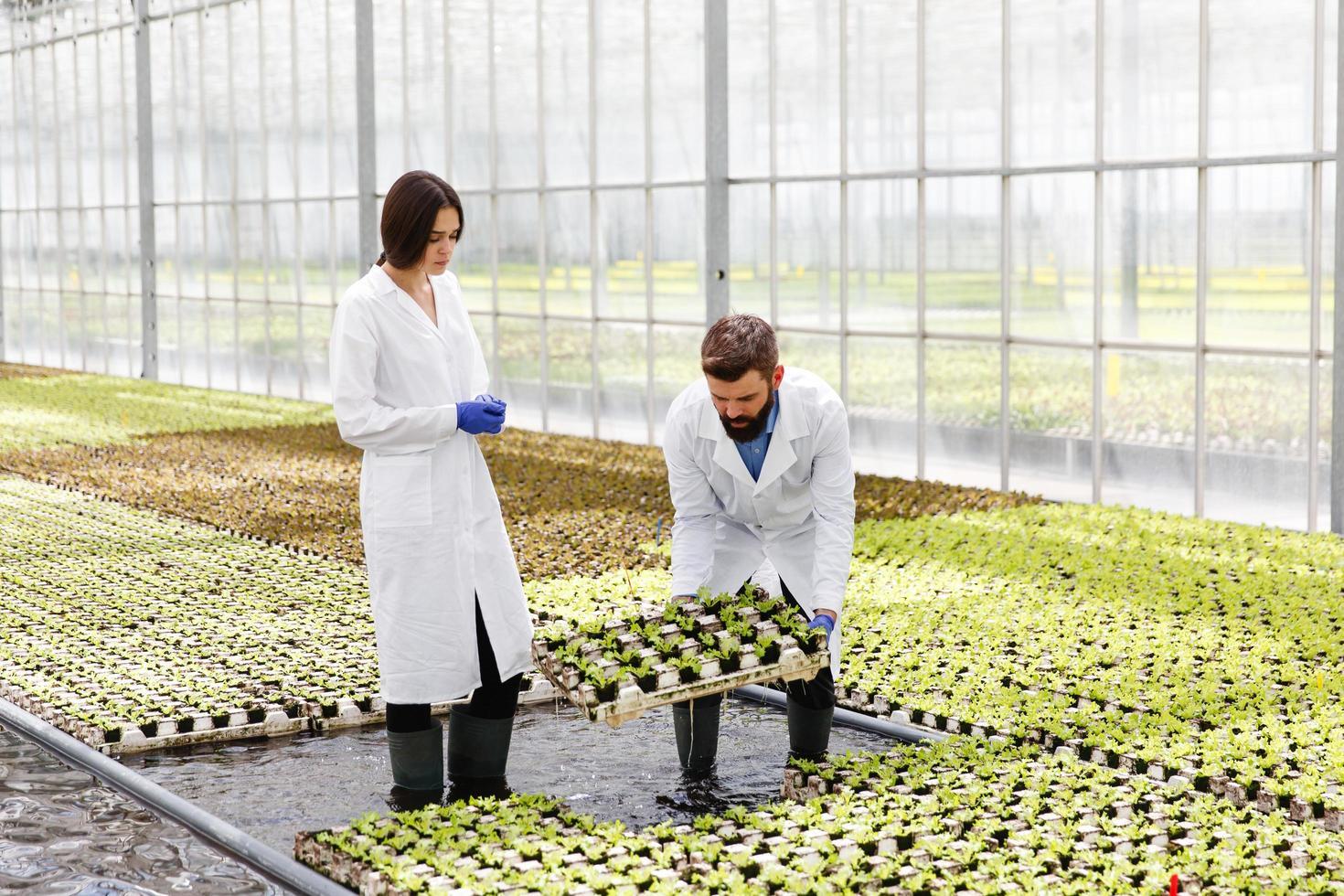 twee wetenschappers in de kas foto