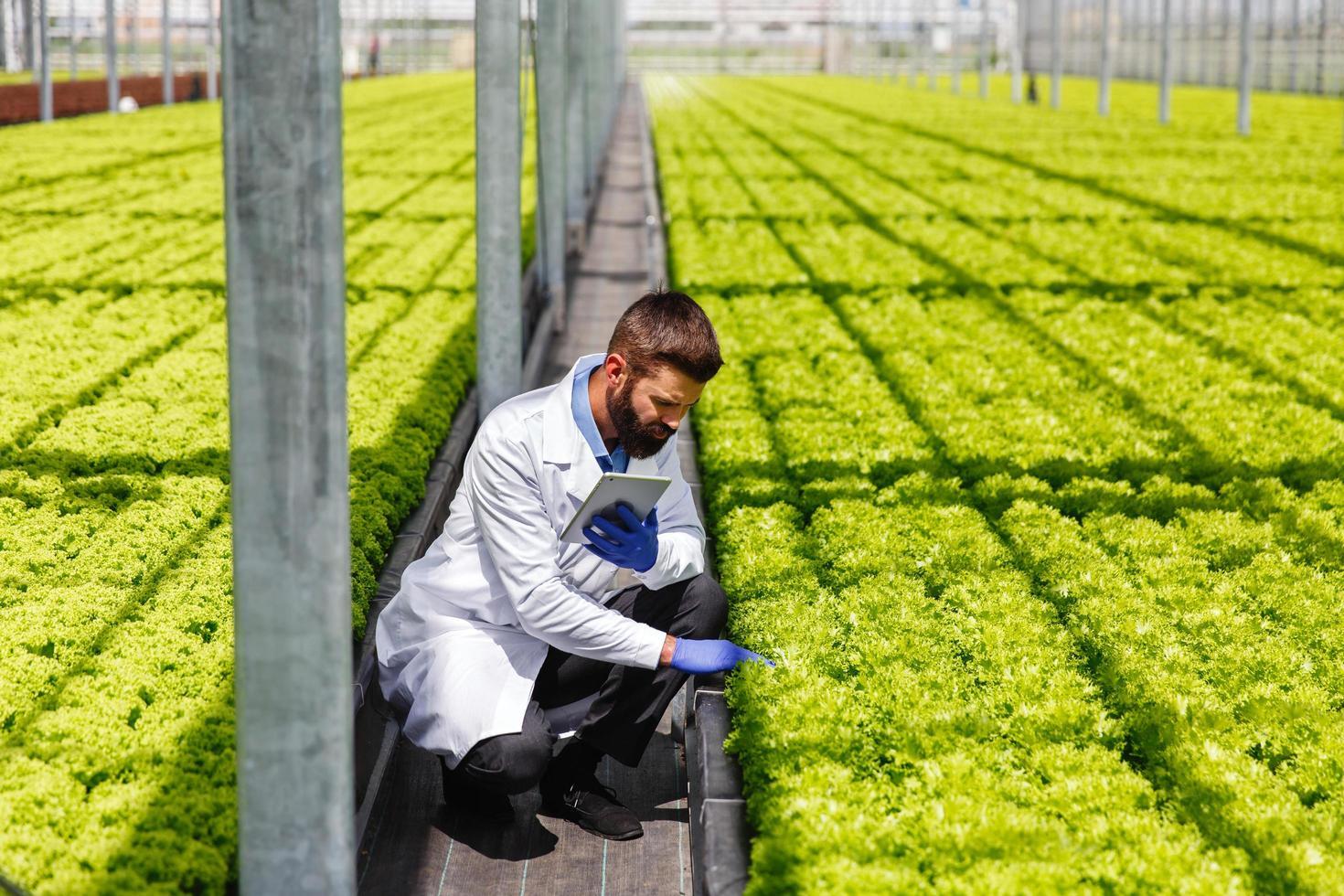 mannelijke onderzoeker die planten bestudeert foto