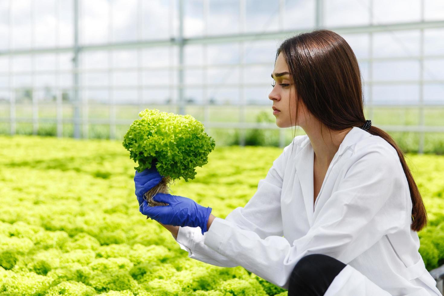 vrouw die planten onderzoekt foto
