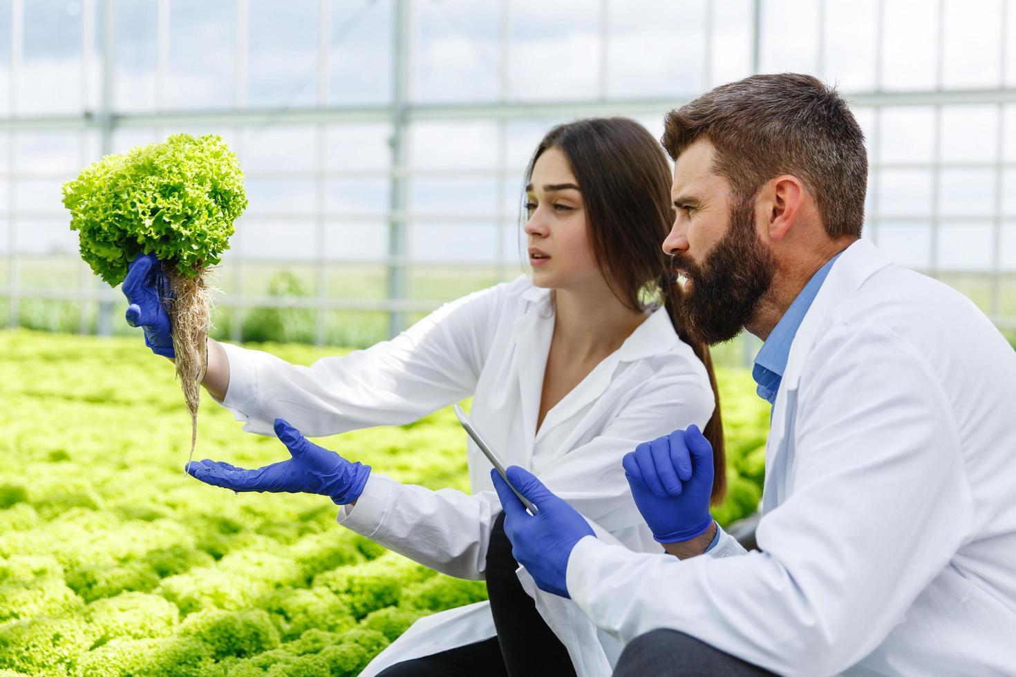 laboratoriumonderzoekers die naar planten kijken foto
