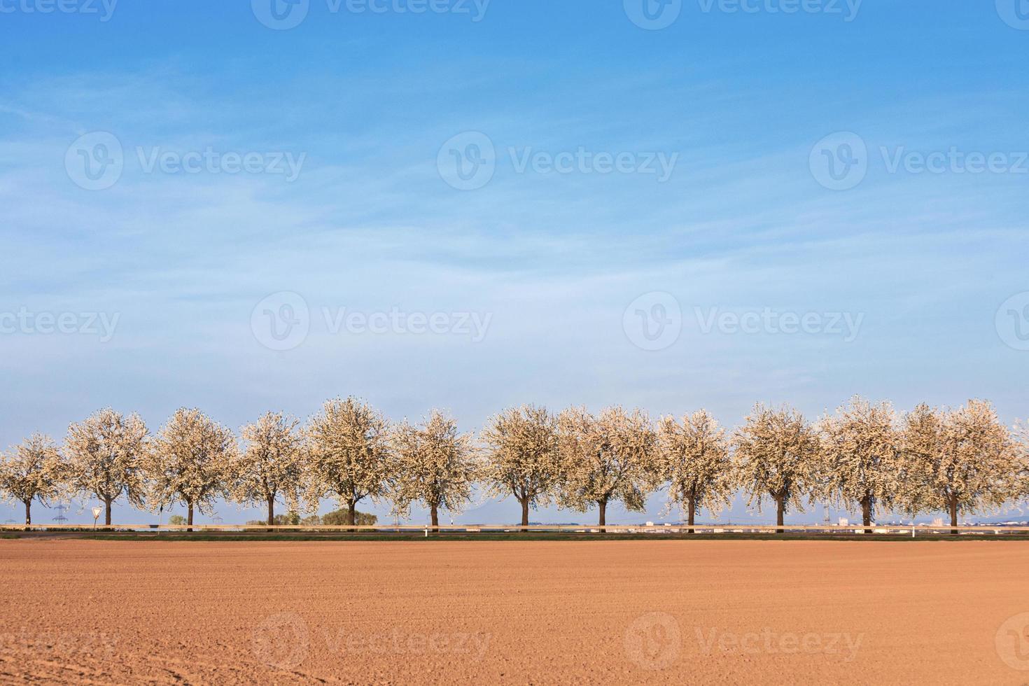 prachtige bloeiende bomen in steegje met veld foto