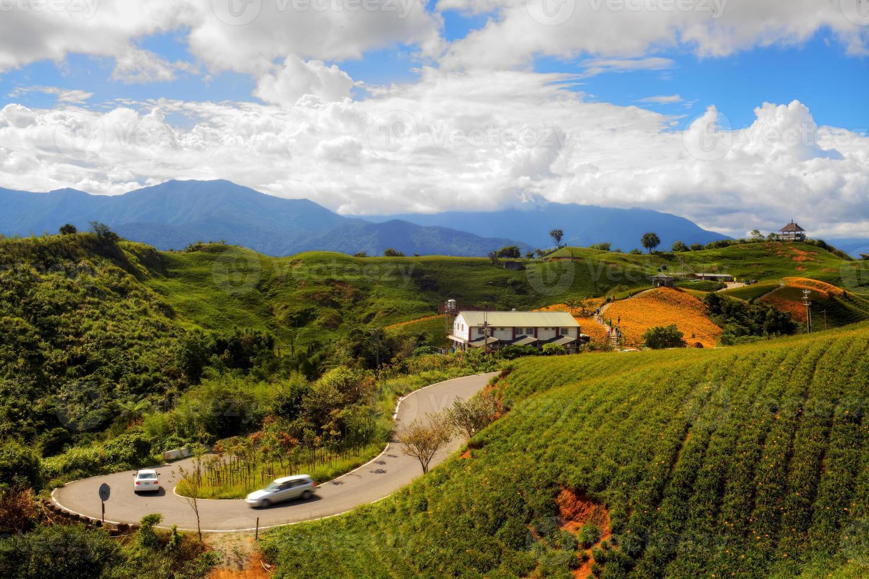 daglelie bloeit op zestig stenen berg foto